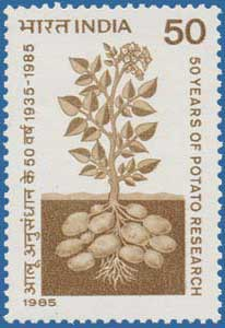 Indian Stamp Commemorating the Potato